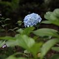 上野公園7