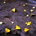 写真: 落ち葉#1