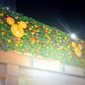 写真: アスナル金山のクリスマス・イルミネーション、今年(2014)はディズニーと提携? - 18