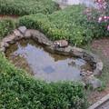 写真: 東山動植物園のタヌキ - 1