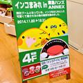 インコまみれ!? at 東急ハンズANNEX店4階