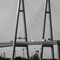 写真: ポートメッセなごやから見た「名港西大橋」 - 5(モノクロ)