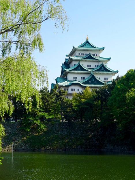 名城公園から見上げた名古屋城天守閣 - 11