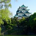 写真: 名城公園から見上げた名古屋城天守閣 - 11