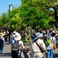 Photos: 大勢の人で賑わってた東山動植物園(2017年5月28日) - 6