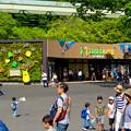 Photos: 大勢の人で賑わってた東山動植物園(2017年5月28日) - 9