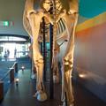 Photos: 東山動植物園 動物開館:アフリカ象の骨格標本 - 7
