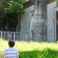 東山動植物園:獣舎の中から外を窺っていたアミメキリン - 1