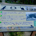 Photos: 東山動植物園:綺麗に整備されてた恐竜像周辺 - 2(恐竜および恐竜像の説明)