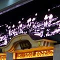 Photos: 大須商店街 万松寺(2017年7月1日) - 3:ディスプレイに蓮の花