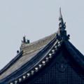 写真: 犬山城下町から見上げた、落雷でシャチホコが壊れた犬山城(2017年7月15日) - 8