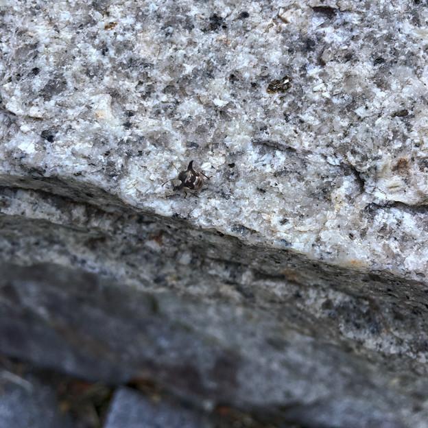 写真: 落合公園にいた変わった虫 - 1