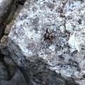 写真: 落合公園にいた変わった虫 - 2