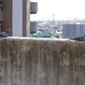イオン小牧店屋上駐車場から見た景色 - 15:塀の上で日向ぼっこしてる(?)鳩