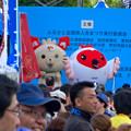 ふるさと全国県人会まつり 2017 No - 24:ステージ上でPRする新潟県のゆるキャラ(やらにゃん、トッキッキ)