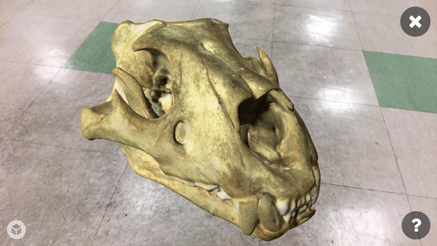 3Dモデル共有サービス「Sketchfab」公式アプリ - 83:3DモデルをAR!(ライオンの頭蓋骨)