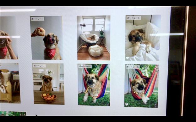 macOS High Sierraの写真アプリ - 5:犬もポートレートと判別?w