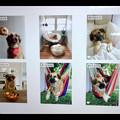 写真: macOS High Sierraの写真アプリ - 5:犬もポートレートと判別?w