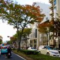 すっかり秋の装いとなっていた名古屋栄(2017年11月3日) - 13