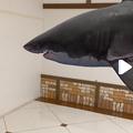写真: 空中を泳ぐリアルなサメをAR表示できる「shARk」:アプリ内課金でホオジロザメを表示 - 21