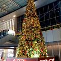 写真: ゲートタワー前のクリスマスツリー(2017年11月12日) - 2