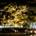 先日始まったばかりの名古屋駅周辺のクリスマス・イルミネーション 2017 No - 7