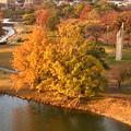 写真: 落合公園 水の塔から見下ろした、夕暮れ時の紅葉した木々 - 3