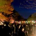 Photos: 東山動植物園の紅葉ライトアップ 2017 No - 2