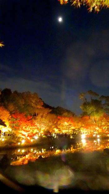 東山動植物園の紅葉ライトアップ 2017 No - 20:月と紅葉