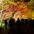 東山動植物園の紅葉ライトアップ 2017 No - 33
