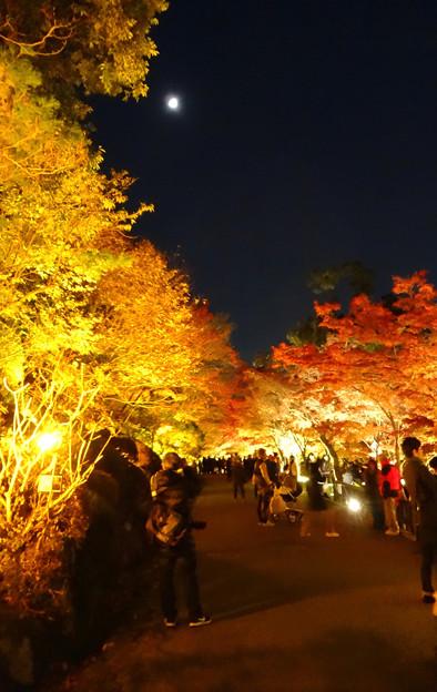 東山動植物園の紅葉ライトアップ 2017 No - 44:月と紅葉