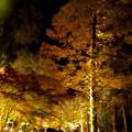 東山動植物園の紅葉ライトアップ 2017 No - 47
