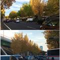 若宮大通公園の紅葉した並木 - 6