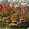落合公園 水の塔から見下ろした紅葉した木々(2017年12月7日) - 1