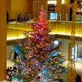 JPタワー名古屋のクリスマスツリー 2017 No - 10