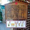 写真: 戌年で賑わう2018年正月の「伊奴(いぬ)神社」 - 21