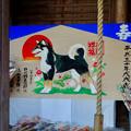 写真: 三光稲荷神社の犬の絵馬