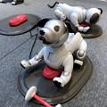 写真: ソニーストア名古屋で始まってた新型「aibo」の展示会 - 3