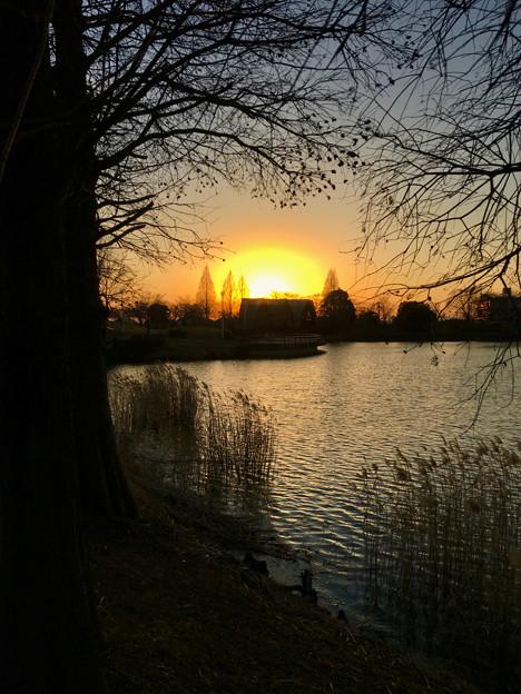 落合公園:落合池の夕焼け - 1