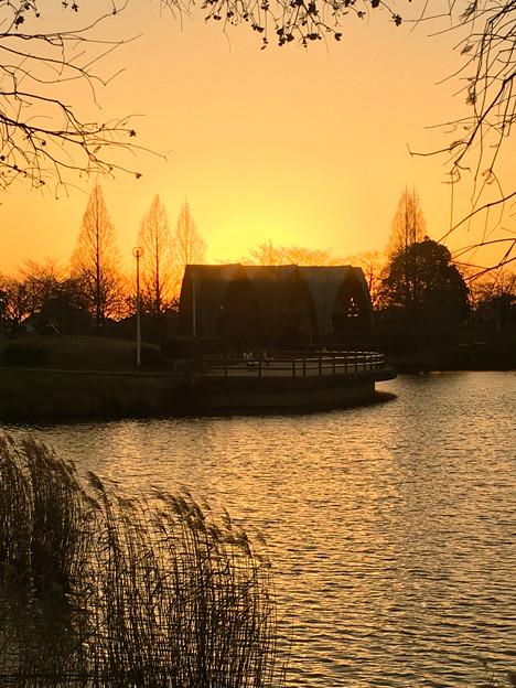 落合公園:落合池の夕焼け - 3