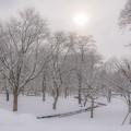 Photos: 白の世界