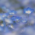 写真: 青の世界 2