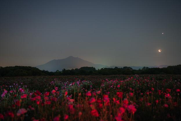 写真: 真夜中のポピー畑