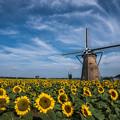 写真: 夏の風景