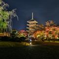 写真: そうだ 京都、行こう 2