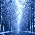 メタセコイア並木 -冬-