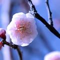 春の日差しの中で!