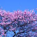 春の空に向かって