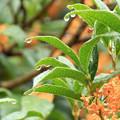 Photos: 秋雨に打たれて!
