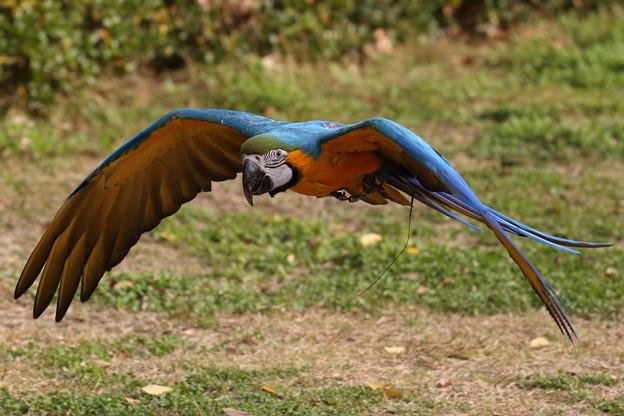 美しき羽を羽ばたかせ・・・